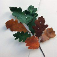 CHÊNE feuilles parchemin