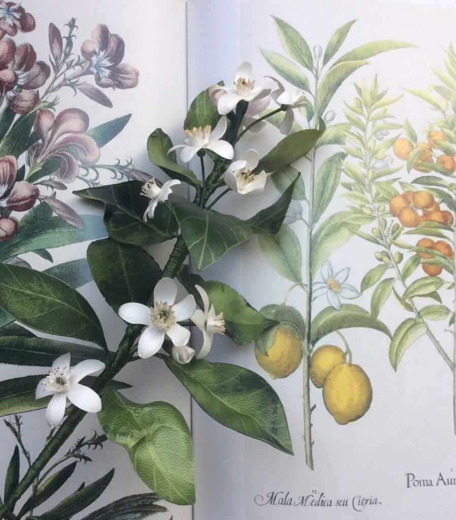 ZAGARA BRANCH fleurs d'agrume en parchemin et soie AM*F